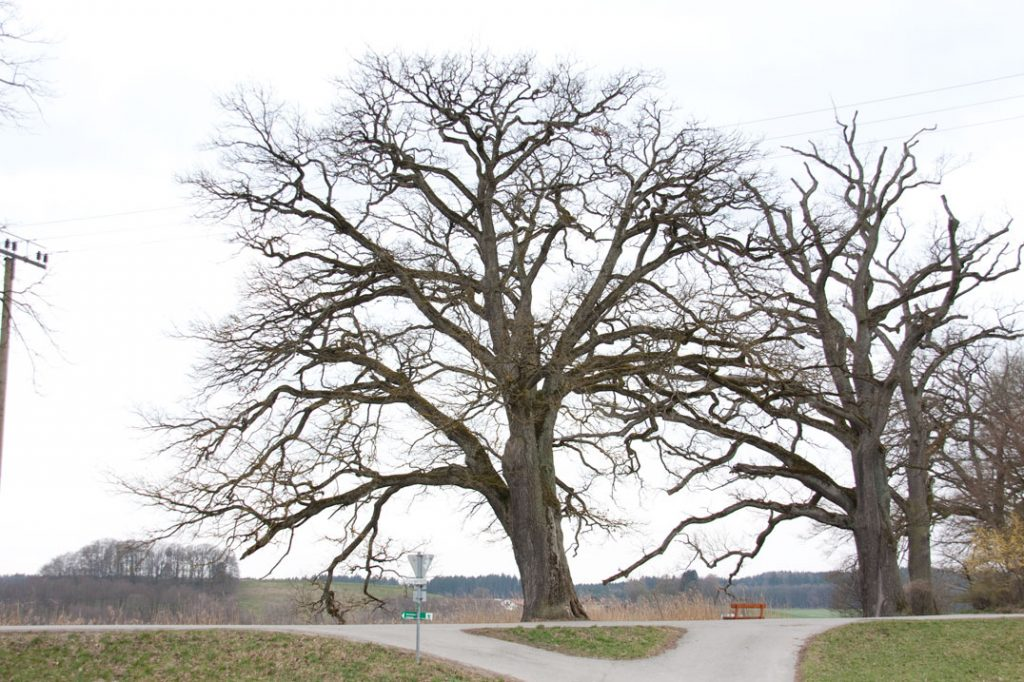 Foto 5: Baum für den Hintergrund
