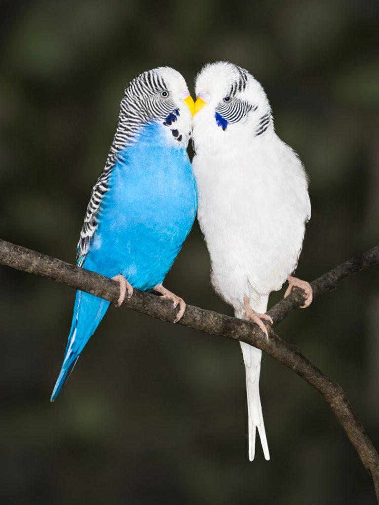 Lieblingsfarbe Blau