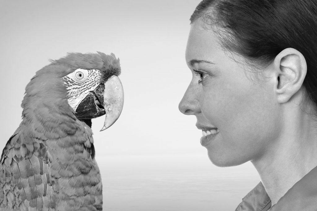 Gedankenaustausch mit Papagei #1Fotos: ©Christian Maurer -, ©Robert Kneschke - stock.adobe.com; L.WieseMontage: L.Wiese