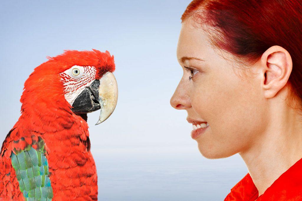 Gedankenaustausch mit Papagei<br />Fotos: ©Christian Maurer -, ©Robert Kneschke - stock.adobe.com; L.Wiese<br />Montage: L.Wiese