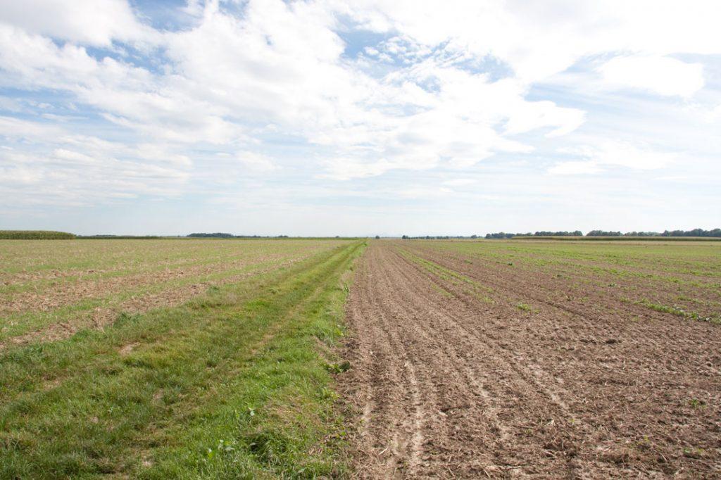 Foto 4: Feld und Himmel mit Fokus auf den vorderen Bereich
