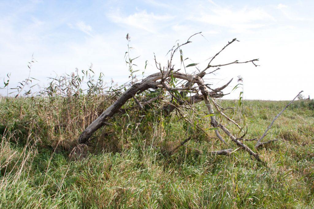 Foto 6: Gras für den Vordergrund