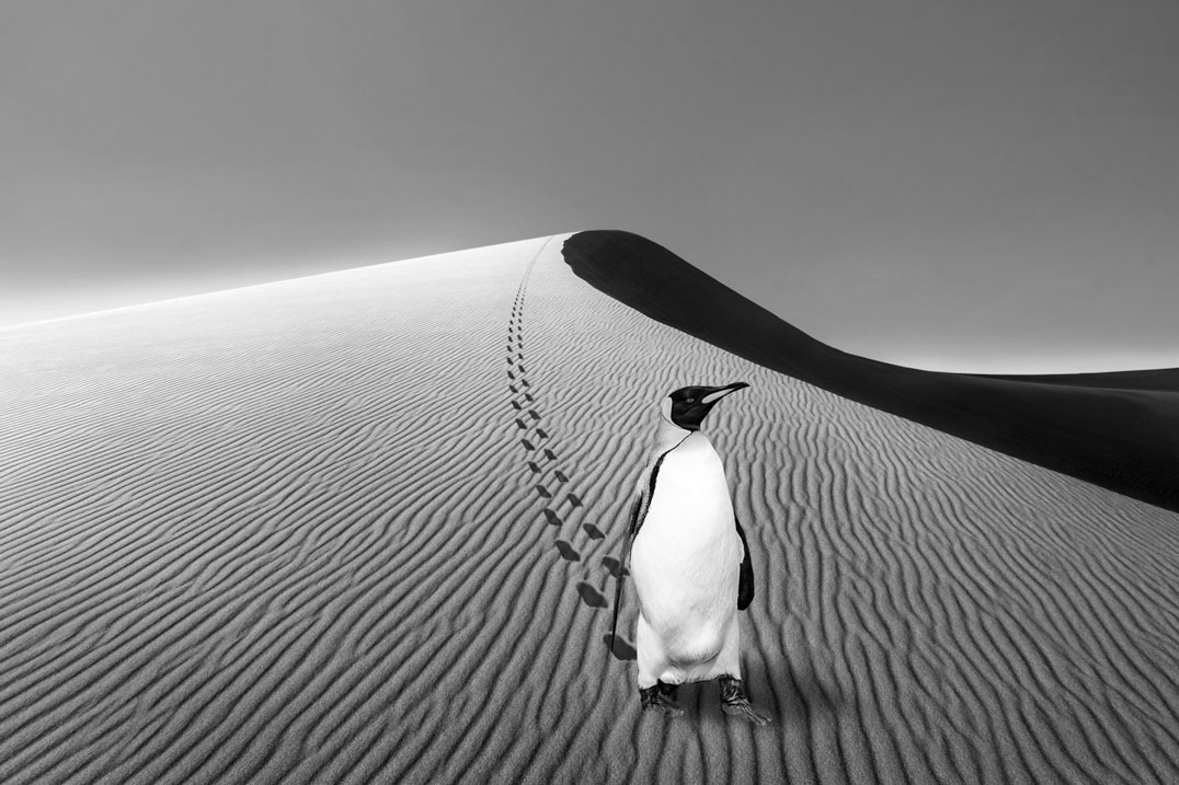 Pinguin in Namibia #1; Montage: L.Wiese;Fotos: ©mophoto -, ©seafarer81 - stock.adobe.com; L.Wiese