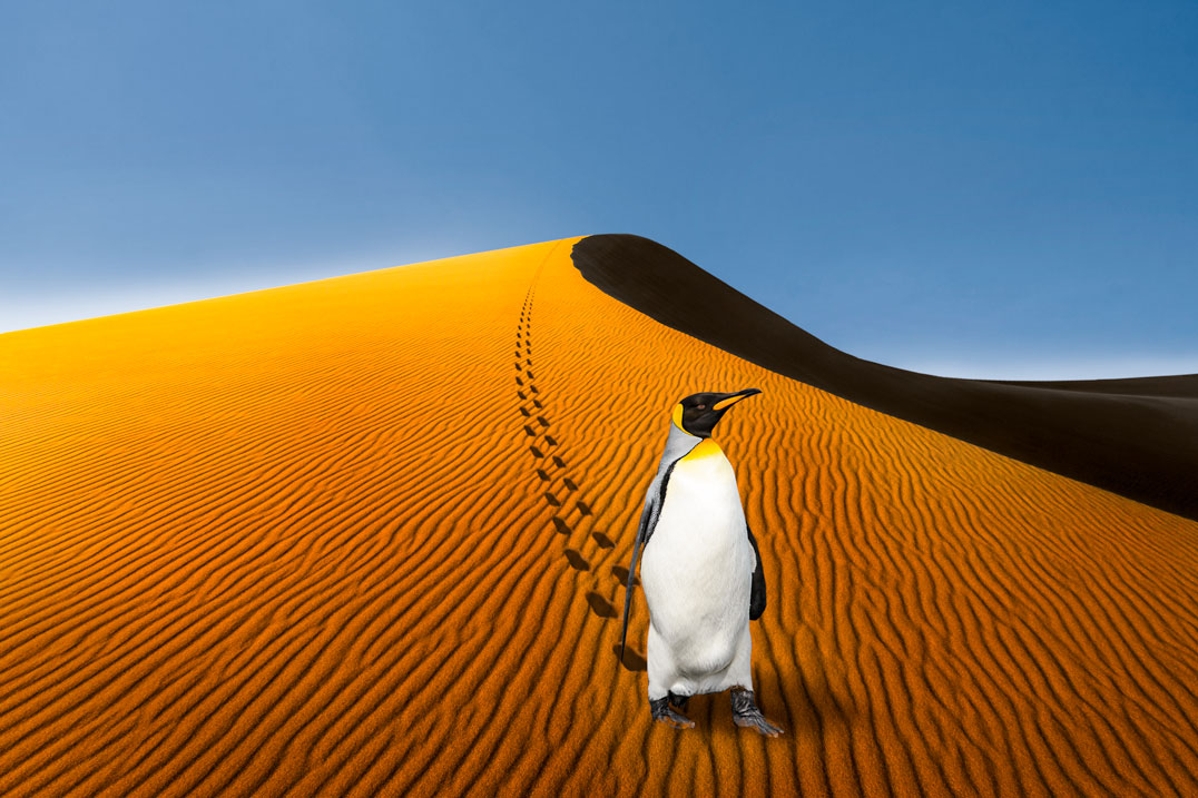 Pinguin in Namibia; Montage: L.Wiese;Fotos: ©mophoto -, ©seafarer81 - stock.adobe.com; L.Wiese