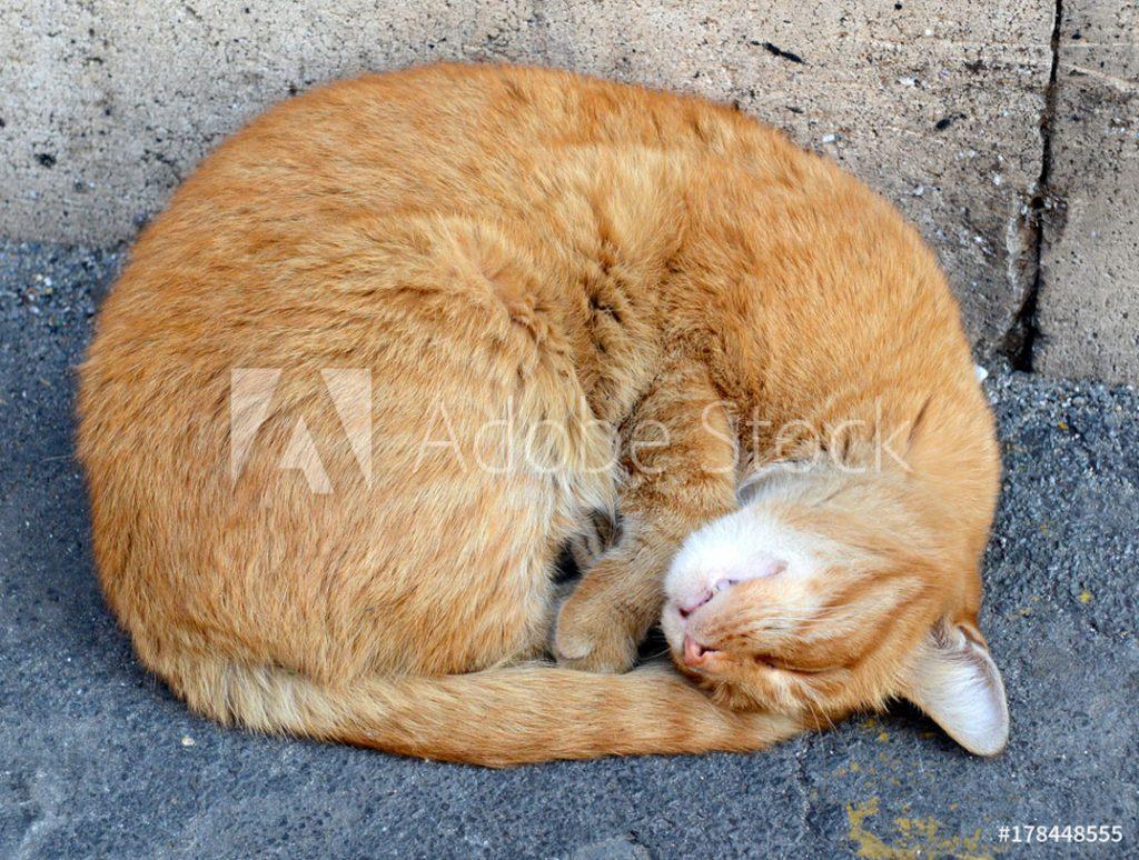 Rechte Katze; ©robert cicchetti - stock.adobe.com